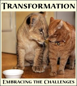 Transormation